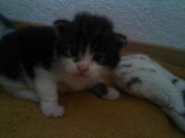 Foto 3 Unsere Main Coon Cats of the Caribbean sind gelandet
