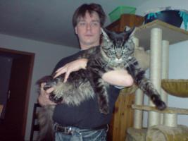 Foto 4 Unsere Main Coon Cats of the Caribbean sind gelandet