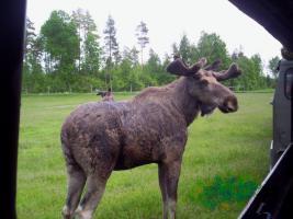 Foto 13 Urlaub in Süd- Schweden, Ferienhaus m. Boot u. Sauna