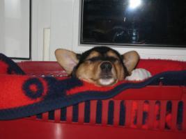 Foto 4 Urlaubsbetreuung für Haustiere