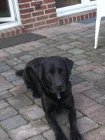 Urlaubsbetreuung für unseren Labradorrüden