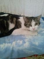Foto 2 Valentina, Katze, 2 Jahre, ein Leben ohne Liebe
