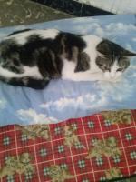 Foto 3 Valentina, Katze, 2 Jahre, ein Leben ohne Liebe