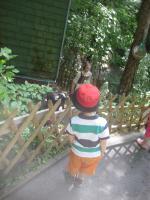 Foto 3 Vati und der Hund im VW Bulli unterwegs , PAPA sach mal.. spies daddy testet mit kindern spielplätze und spielsachen