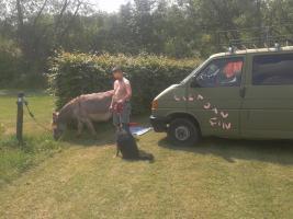Foto 6 Vati und der Hund im VW Bulli unterwegs , PAPA sach mal.. spies daddy testet mit kindern spielplätze und spielsachen