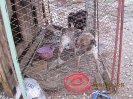 Verein Tiere-wollen-Hilfe braucht Ihre Hilfe um zu helfen