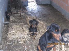 Foto 2 Verein Tiere-wollen-Hilfe braucht Ihre Hilfe um zu helfen