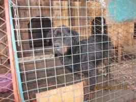 Foto 3 Verein Tiere-wollen-Hilfe braucht Ihre Hilfe um zu helfen