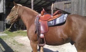 Vergebe Reitbeteiligung auf meinem Quarter Pony Wallach