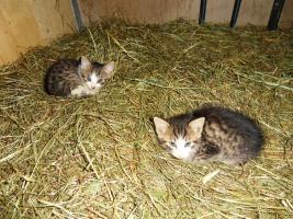Vergeben 2 süsse zutrauliche Katzen an guten Platz. Zutraulich, an Kinder gewöhnt. Herkunft: Kinderbauernhof Zittrauerhof, www.gasteinurlaub.com info@gasteinurlaub.com Tel. 06432 8262
