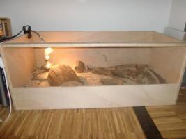 Foto 3 Vergeben unsere kleine süße Vierzehenschildkröte, ca. 10 Jahre alt inkl. Terrarium&sämtlichem Zubehör