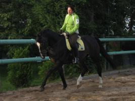 Foto 2 Verkauf Dressurpferd Kl. M, ggf. Tausch geg. Youngster