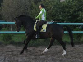 Foto 3 Verkauf Dressurpferd Kl. M, ggf. Tausch geg. Youngster