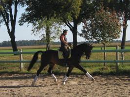 Foto 4 Verkauf Dressurpferd Kl. M, ggf. Tausch geg. Youngster
