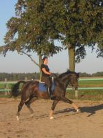 Foto 5 Verkauf Dressurpferd Kl. M, ggf. Tausch geg. Youngster