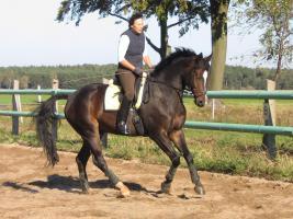 Foto 7 Verkauf Dressurpferd Kl. M, ggf. Tausch geg. Youngster
