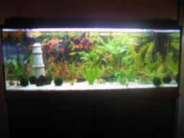 Verkaufe 160l Aquarium mit kompletten Besatz + Unterschrank