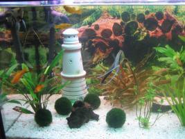 Foto 4 Verkaufe 160l Aquarium mit kompletten Besatz + Unterschrank