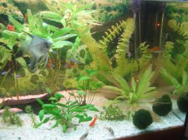 Foto 5 Verkaufe 160l Aquarium mit kompletten Besatz + Unterschrank