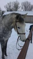 Foto 8 Verkaufe 5 jährige Reitpferde Stute