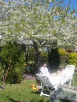 Foto 4 Verkaufe Bungalow auf R�gen in Kleingartenanlage