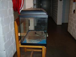 Foto 3 Verkaufe Gebrauchtes Aquarium 41,5 x 45,0 x 35,0
