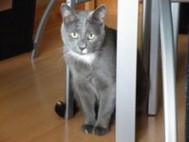 Foto 2 Verkaufe meine Katzen und Zubehör
