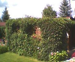 Foto 2 Verkaufe Kleingarten mit Gartenlaube  im KGV Waldblick in Dresden-Weixdorf neben dem Waldbad