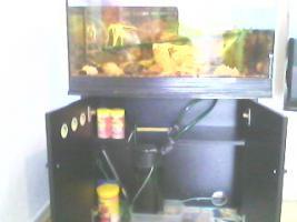 Verkaufe Komplette Aquarium
