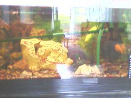 Foto 3 Verkaufe Komplette Aquarium