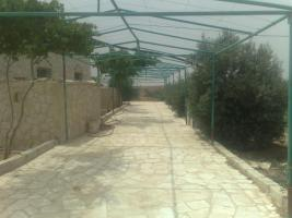 Foto 6 Verkaufe Olivenplantage in Jordanien 55.000qm mit 200 qm Haus