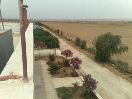 Foto 14 Verkaufe Olivenplantage in Jordanien 55.000qm mit 200 qm Haus