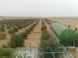 Foto 15 Verkaufe Olivenplantage in Jordanien 55.000qm mit 200 qm Haus