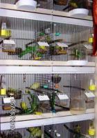 Verkaufe Zucht Regal für Kanarien