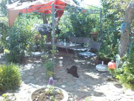 Verkaufe gepflegten Kleingarten in Ribnitz-Damgarten/ Nähe Ostsee