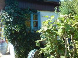 Foto 2 Verkaufe gepflegten Kleingarten in Ribnitz-Damgarten/ Nähe Ostsee