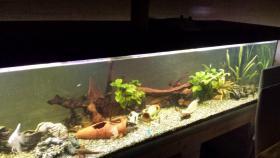 Foto 2 Verkaufe komplettes 1000 L Aquarium