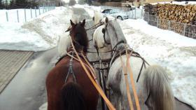 Verkaufe wegen Trennungsfall meine Pferde leider