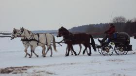 Foto 2 Verkaufe wegen Trennungsfall meine Pferde leider