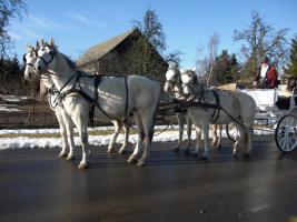 Foto 4 Verkaufe wegen Trennungsfall meine Pferde leider