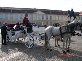 Foto 6 Verkaufe wegen Trennungsfall meine Pferde leider