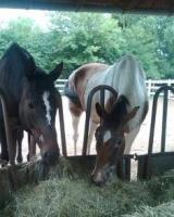 Verkaufen Heu in ''Pferdequalität''