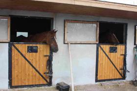 Foto 3 Vermiete Pferde-undPonyboxen