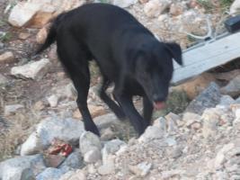 Vermieter gesucht mit Hundeherz
