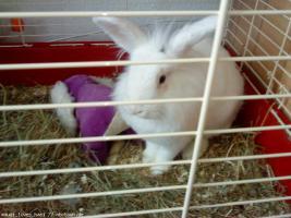 Foto 2 Verschenke 1 Hasen