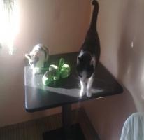 Foto 3 Verschenke 2 Hauskatzen