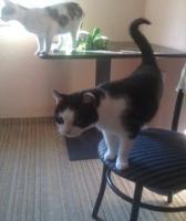 Foto 4 Verschenke 2 Hauskatzen