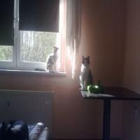 Foto 5 Verschenke 2 Hauskatzen