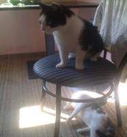 Foto 7 Verschenke 2 Hauskatzen