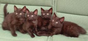 Verschenke Kätzchen männlich